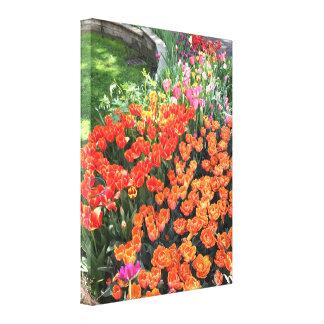 Impressão Em Tela Tulipas coloridas do primavera, jardim superior