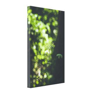 Impressão Em Tela Uma flor selvagem na natureza verde