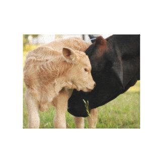 Impressão Em Tela Uma vaca & uma vitela do amor de mãe