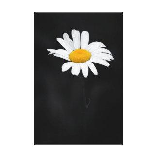 Impressão Em Tela Única flor branca e amarela da margarida no preto