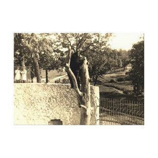 Impressão Em Tela Urso da fotografia dos 1890's dos senhores Parque