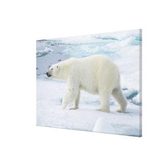 Impressão Em Tela Urso polar que anda, Noruega