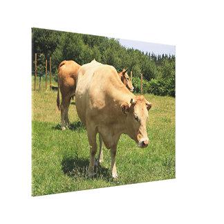 Impressão Em Tela Vacas no campo, EL Camino, espanha 2
