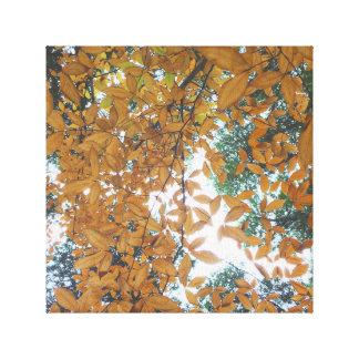 Impressão Em Tela Vista acima nas folhas de outono