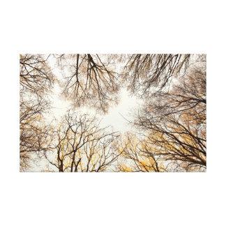 Impressão Em Tela Vista reto acima através das árvores