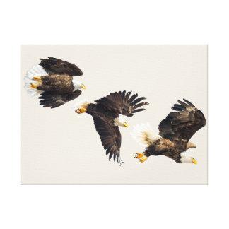 Impressão Em Tela Vôo triplo da águia americana