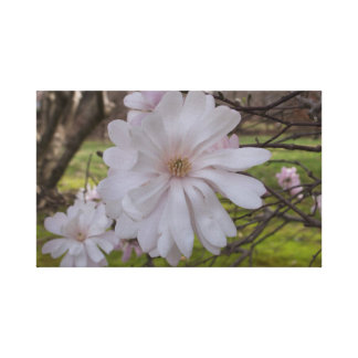 Impressão espectacular da flor da magnólia!