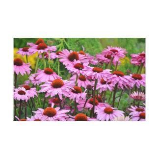 Impressão floral do echinacea roxo