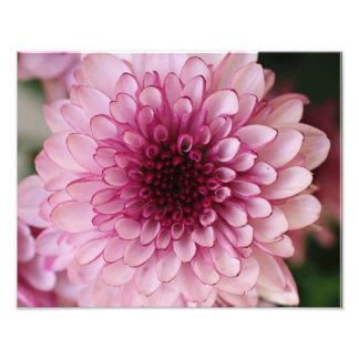 Impressão fotográfico da flor cor-de-rosa foto