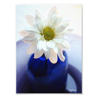 Impressão fotográfico da margarida do cobalto foto artes