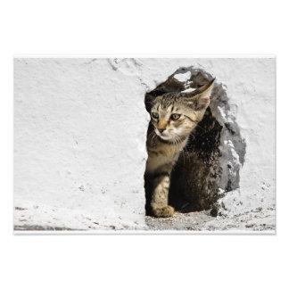 Impressão - gatinho grego bonito em Santorini, Foto