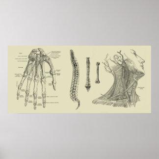 Impressão humano da anatomia