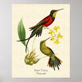 Impressão impetuoso da arte dos colibris do