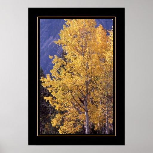 Impressão limitado árvore do poster do álamo treme