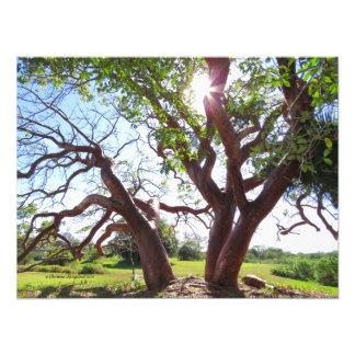 Impressão lindo de Sun das árvores do limbo do Foto