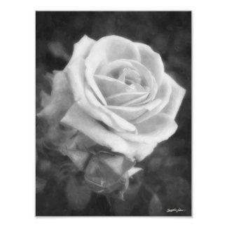 Impressão monocromático do rosa da luz impressão de foto