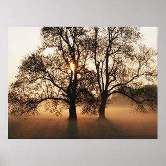 IMPRESSÃO - ouro grande do Sepia de 2 árvores