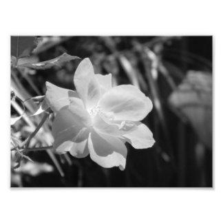 Impressão preto e branco da foto