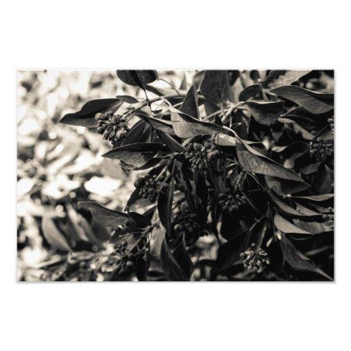 Impressão preto e branco da foto do arbusto