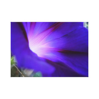 Impressão roxo & azul da corriola