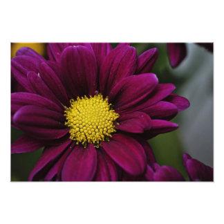 Impressão roxo da flor foto