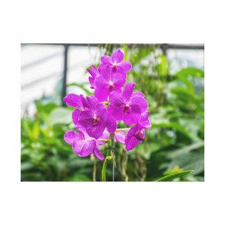 Impressão roxo das canvas das orquídeas
