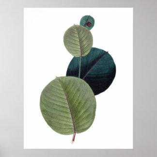 Impressão SUPERIOR botânico da QUALIDADE das folha