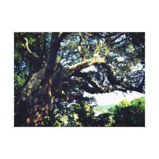 Impressão velho do solteiro da foto da árvore