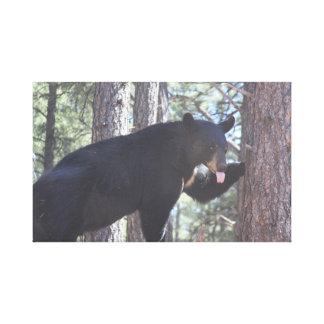 Impressões das canvas do urso preto