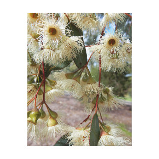 Impressões das canvas - flores da goma azul