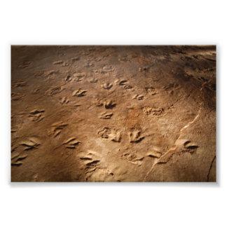 Impressões do pé do dinossauro impressão de foto