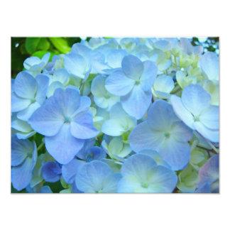 Impressões florais azuis da arte das flores dos impressão de foto