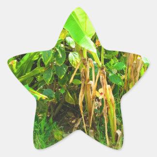 India viaja verde infantil dos rebentos das adesito estrela