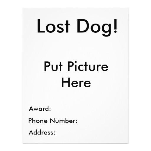 Insecto perdido do cão modelos de panfleto