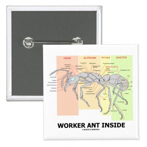 Interior da formiga do trabalhador (anatomia da fo botons