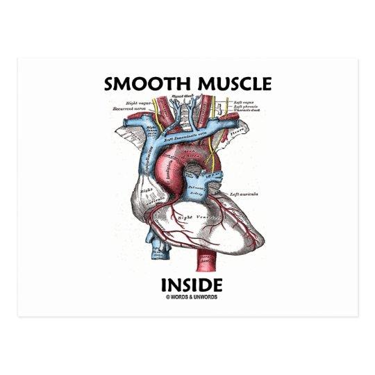 Interior do músculo liso (coração da anatomia do cartão postal