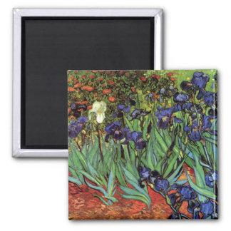 Íris de Van Gogh, belas artes do jardim do vintage Ímã Quadrado
