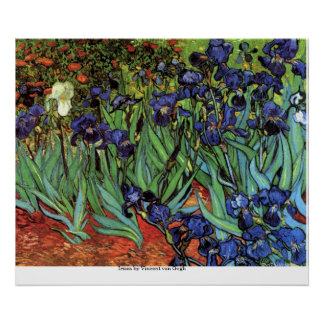 Íris por Vincent van Gogh Pôster
