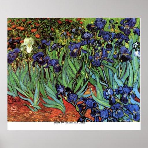 Íris por Vincent van Gogh Posteres