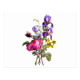 Íris, rosa, e buquê do narciso por Prevost Cartão Postal