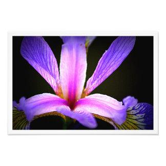 Íris roxa 3e impressão de foto