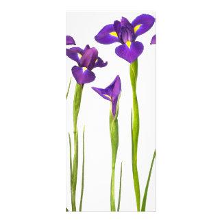 Íris roxas - modelo personalizado flor da íris 10.16 x 22.86cm panfleto