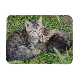"Irmãs do gato malhado 3"""" ímã x4"