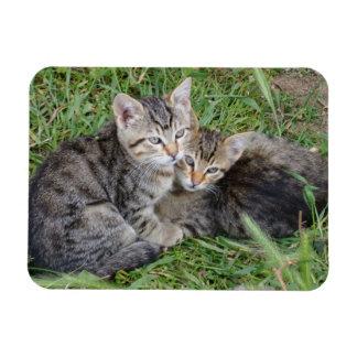 """Irmãs do gato malhado 3"""""""" ímã x4 foto com ímã retangular"""