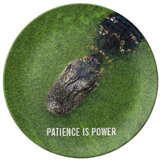 Jacaré • A paciência é poder • Natureza de Florida Prato