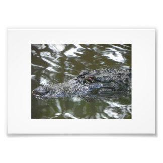 Jacaré de Florida Impressão De Foto