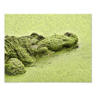 Jacaré - verde na lentilha-d água foto arte