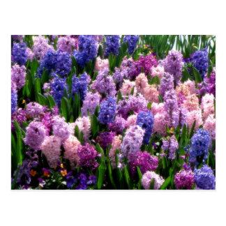 Jacinto comum floral do cartão
