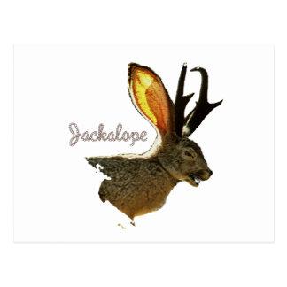 Jackalope Cartão Postal