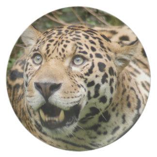 jaguar10x10 pratos de festas